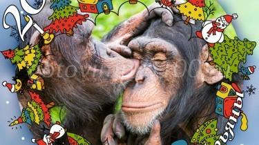 картинка обезьяны