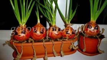 Выращивание зелени на подоконнике